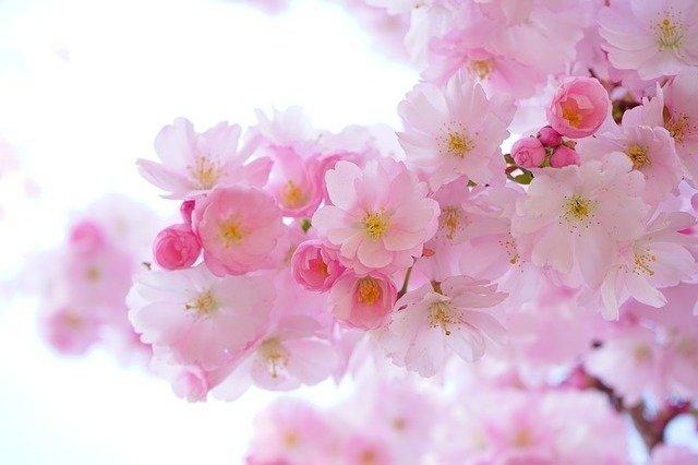 Flores para invitación